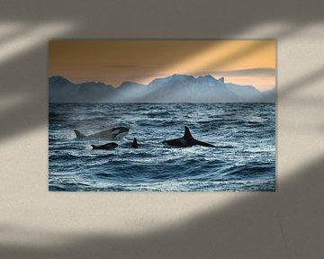 Orca Family van Judith Noorlandt