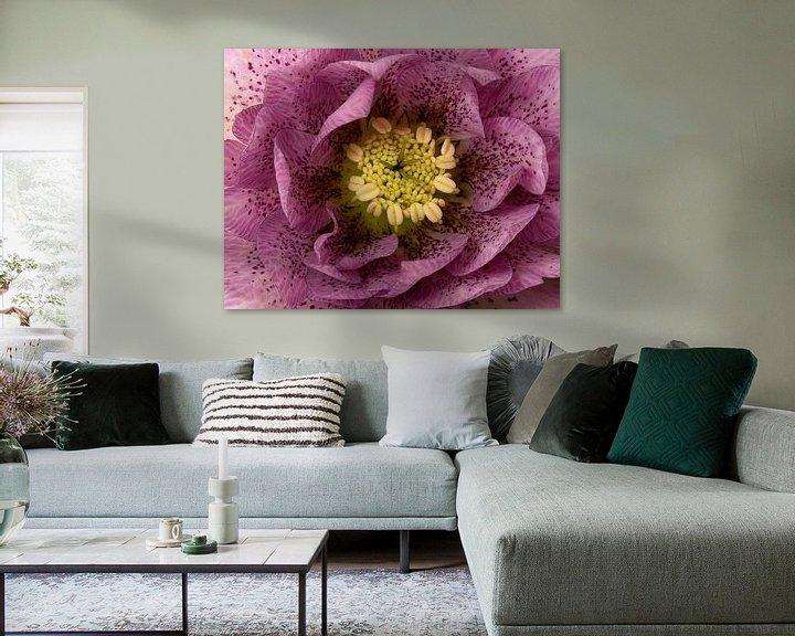 Sfeerimpressie: macro van een paarse kerstroos van Compuinfoto .