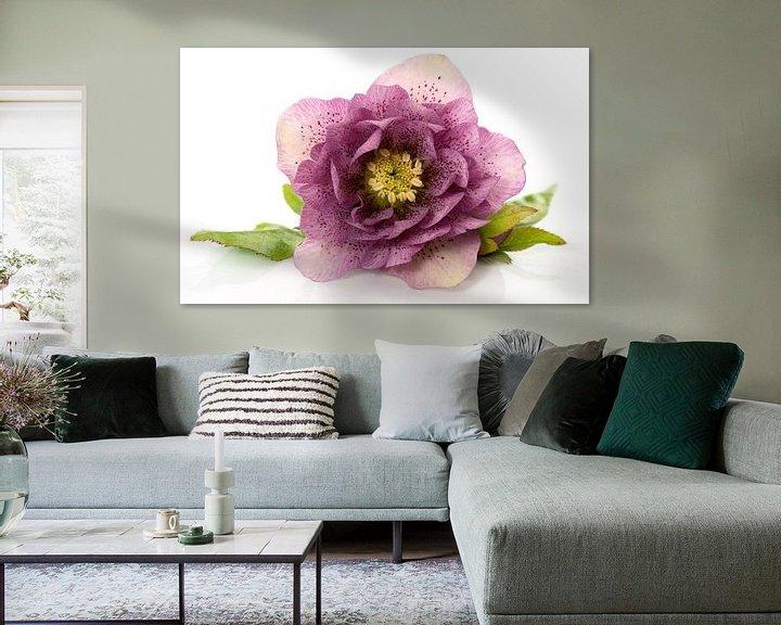 Impression: christmas rose flower in detail sur ChrisWillemsen