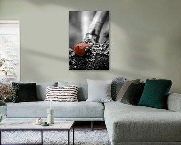 Ladybird colorkey van Malte Pott