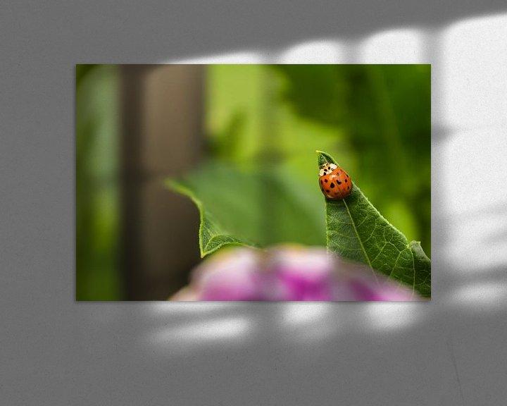Beispiel: Lieveheersbeestje naar de top von Michel Vedder Photography
