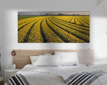 bollenveld geel  van Barend Koper