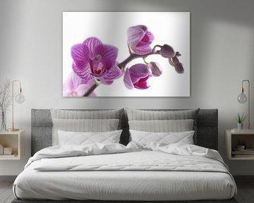 close-up paarse orchidee von Saskia Bon