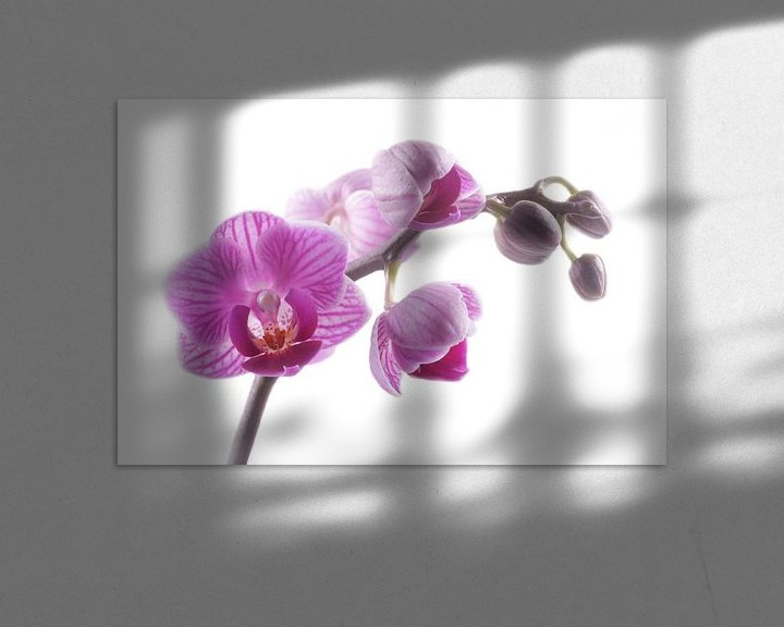 Sfeerimpressie: close-up paarse orchidee van Saskia Bon