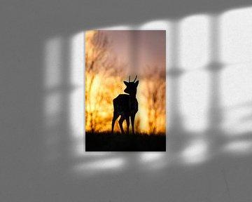 Fallow deer @ sunset van Pim Leijen