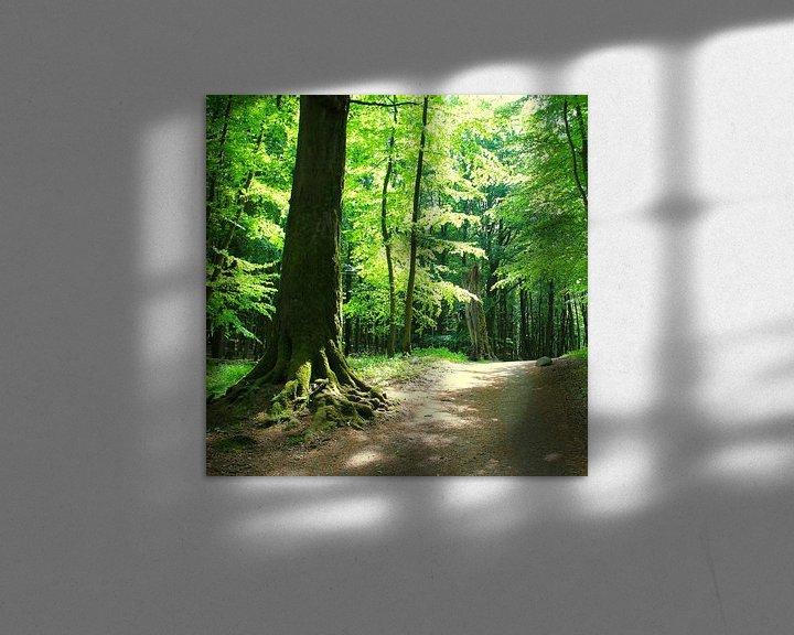 Beispiel: Wald im Gegenilcht von Ostsee Bilder