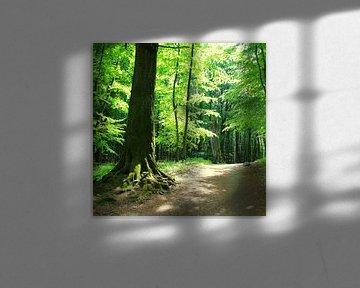 Wald im Gegenilcht von Ostsee Bilder