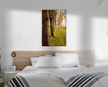 Bomen van Chris Tijsmans