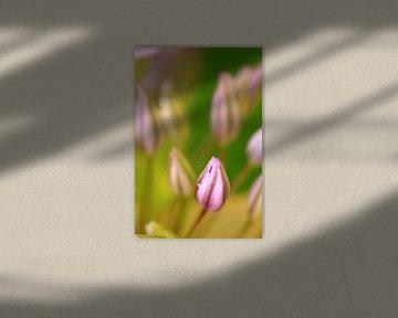a new flower van Marcel van Rijn