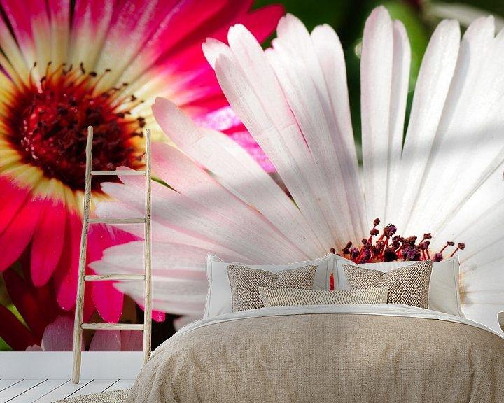 Sfeerimpressie behang: Macro van Spaanse margriet in roze en wit van Thomas Poots