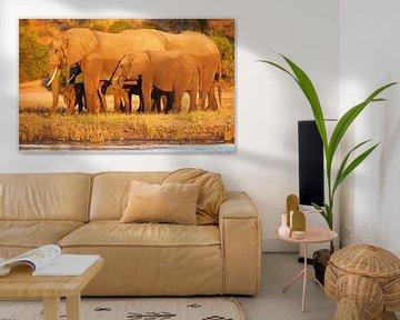 Elephants in the evening light - Africa wildlife van W. Woyke