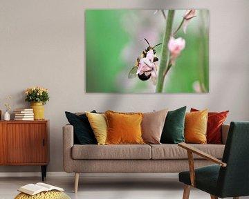 Wesp in roze bloem van Thomas Poots