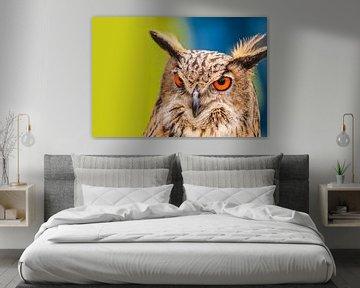 UIL .Owl