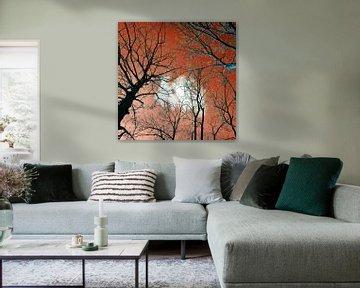 Meditative Kraft der Bäume sur Silva Wischeropp