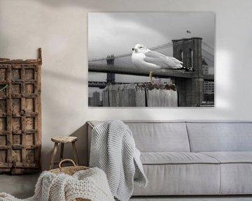 Möwe an der Brooklyn Bridge von Jutta Klassen