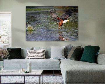 Fischender Schreiseeadler - Afrika wildlife