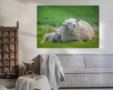 Lente, schapen in de wei! Moeder schaap met lammetje. van Michèle Huge