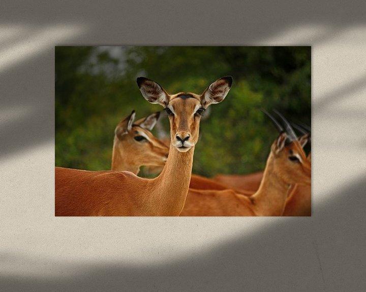 Sfeerimpressie: southafrica ... real beauty van Meleah Fotografie