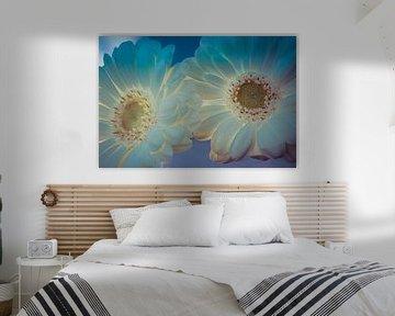 Zwei weiße Rosen mit Hintergrundbeleuchtung von Rietje Bulthuis