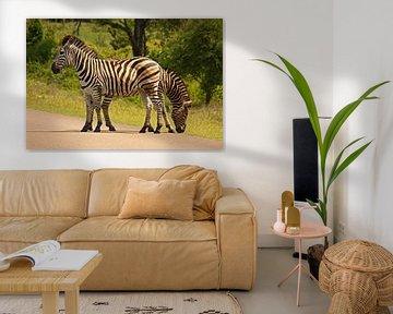 southafrica ... Doppelkopf van Meleah Fotografie