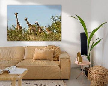 southafrica ... Giraffenstaffel van Meleah Fotografie