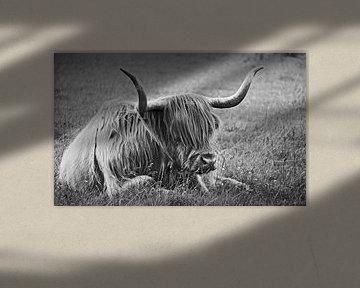 impressions of scotland - the highlander von Meleah Fotografie