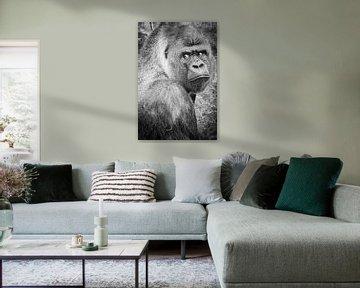 Gorilla Bokito Blijdorp Zoo von Fons Simons