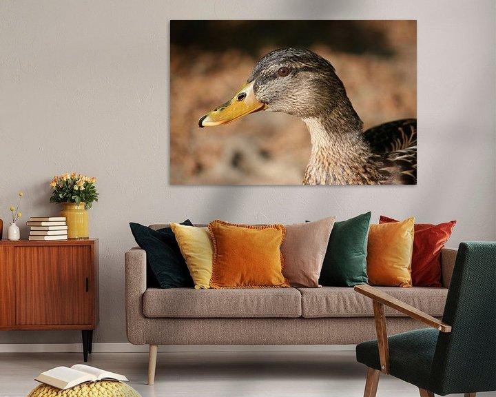 Beispiel: Entenweibchen von Meleah Fotografie