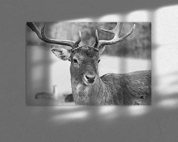 Rudolph? ... that's not my name! van Meleah Fotografie