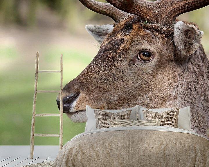 Beispiel fototapete: hattu möhrn? von Meleah Fotografie