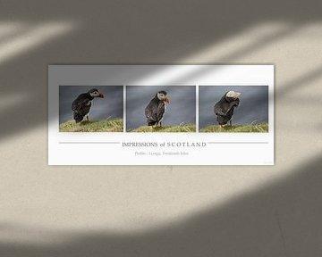 [impressions of scotland] - puffin trilogie von Meleah Fotografie