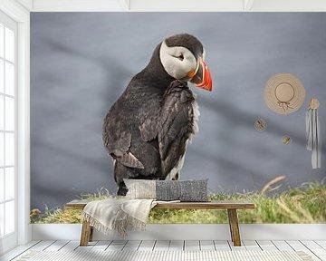 [impressions of scotland] - puffin trilogie no. 2 van Meleah Fotografie