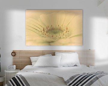 Blumen Herz Gerbera, Traum Atmosphäre von Rietje Bulthuis