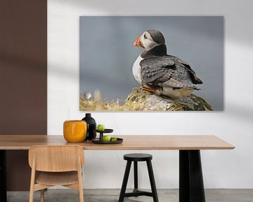 "[impressions of scotland] - puffin ""watching"" van Meleah Fotografie"