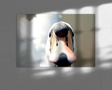Zwaan (1) - mijn lieve zwaan van Norbert Sülzner