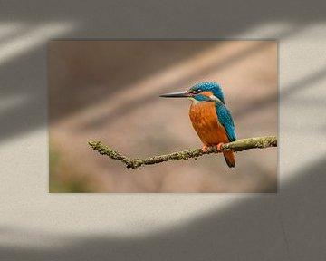 Ijsvogel (Alcedo atthis) van Richard Guijt Photography