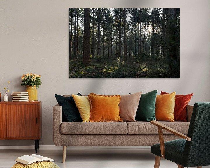 Sfeerimpressie: Zon schijn door de bomen in Lage Vuursche van Jaap Mulder
