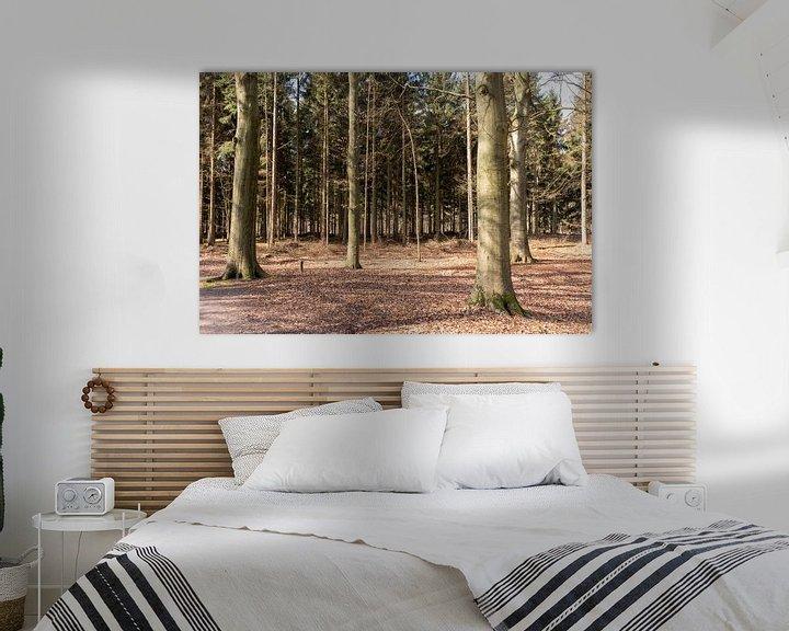 Sfeerimpressie: Bomen in de zon in Lage Vuursche van Jaap Mulder