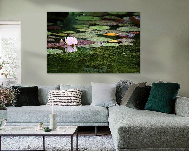 Sfeerimpressie: water lily van Meleah Fotografie