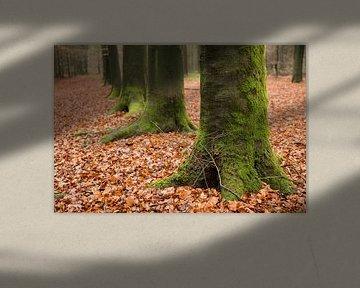 Groene boomvoeten op een bladertapijt van Tonko Oosterink
