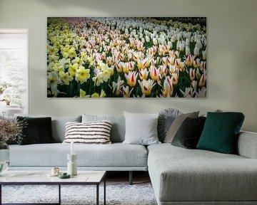 Tulpenbed von C.T. Lam