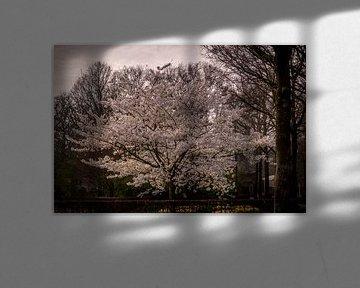 Boom met witte bladeren von C.T. Lam