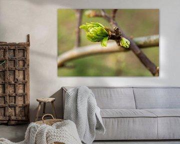 uitlopende bladeren aan een boom von E.M Hak