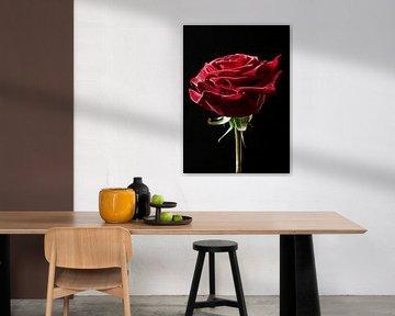 rode roos van Eric van den Berg
