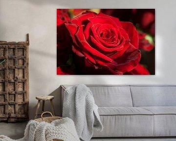 rode roos von Eric van den Berg
