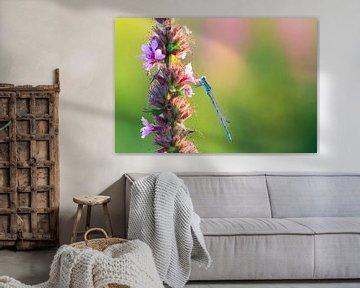 Watersnuffel met roze lupine van Dennis van de Water