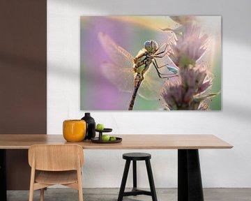 Bruinrode heidelibel ochtendlicht van Dennis van de Water
