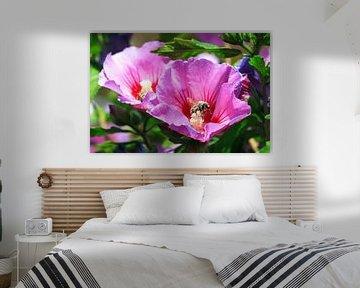 Hibiscus Bij sur Dennis van de Water