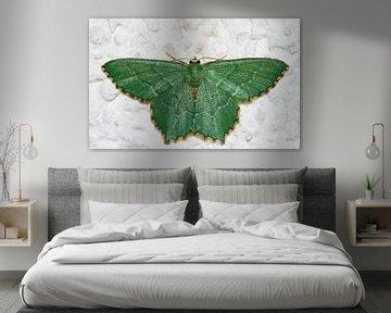 Smaragdgroene zomervlinder van Dennis van de Water