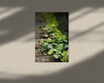 evergreen von Meleah Fotografie